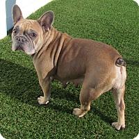 Adopt A Pet :: Julianna - House Springs, MO