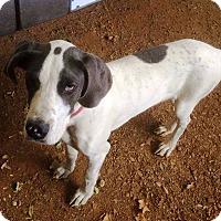 Adopt A Pet :: Willy - Goodlettsville, TN
