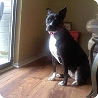 Adopt A Pet :: Pennie -- Gentle, great with small children - Rowayton, CT