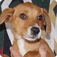 Adopt A Pet :: Lucky - Billerica, MA