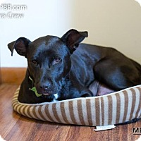 Adopt A Pet :: Sigma - Southampton, PA