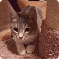 Adopt A Pet :: Jax - Harrisonburg, VA