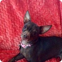Adopt A Pet :: Pixie - Brea, CA