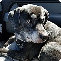 Adopt A Pet :: Chance - Gainesville, FL