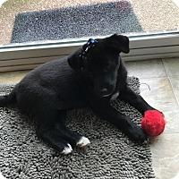 Adopt A Pet :: Kiowa - Nashville, TN
