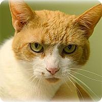 Adopt A Pet :: Cisco - Muskegon, MI