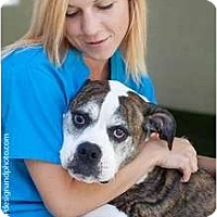 Adopt A Pet :: Moe - Mission Viejo, CA
