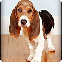 Adopt A Pet :: Elle May - Owensboro, KY