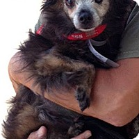 Adopt A Pet :: Quigley - Irvine, CA