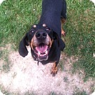 Adopt A Pet :: Adelia - Sherman, CT