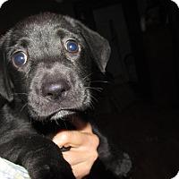 Adopt A Pet :: Erica - Rocky Mount, NC