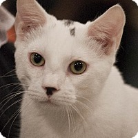 Adopt A Pet :: Tennyson - Knoxville, TN