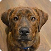 Adopt A Pet :: Curly - Berkeley Heights, NJ