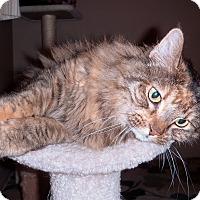 Adopt A Pet :: Sassy - Mesa, AZ