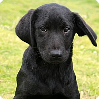 Adopt A Pet :: Pippy~ meet me! - Glastonbury, CT