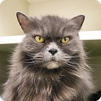 Adopt A Pet :: Oscar - Fairport, NY
