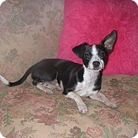 Adopt A Pet :: Toby Gillis - Buchanan Dam, TX
