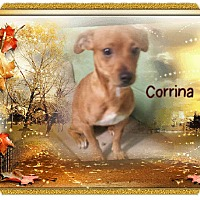 Adopt A Pet :: corrina - Gadsden, AL