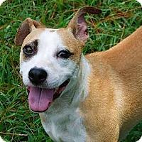 Adopt A Pet :: Pandora - Staunton, VA