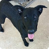 Adopt A Pet :: Emmett - Charlotte, NC