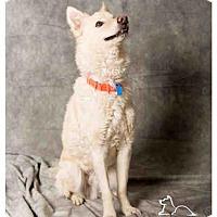 Adopt A Pet :: YODI - Salt Lake City, UT