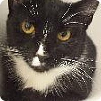 Adopt A Pet :: Catsy Cline - Queenstown, MD