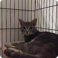 Adopt A Pet :: Ivory - Brainardsville, NY