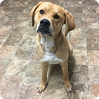 Adopt A Pet :: Benson - Darlington, SC