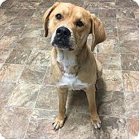 Adopt A Pet :: Benson - Darlington, SC