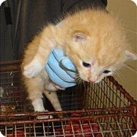 Adopt A Pet :: Kaname - Raleigh, NC