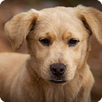 Adopt A Pet :: Rowdy ~ ADOPTED! - Brattleboro, VT