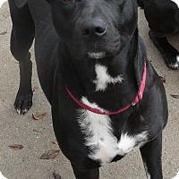 Adopt A Pet :: Mallory - Westerly, RI