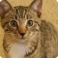 Adopt A Pet :: Louie - Tampa, FL