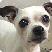 Adopt A Pet :: Emma - Springdale, AR