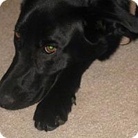 Adopt A Pet :: Ossi - El Cajon, CA