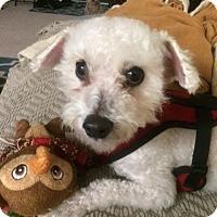 Adopt A Pet :: Marley - Hollister, CA
