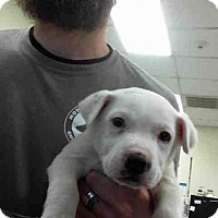 Adopt A Pet :: BREES - Conroe, TX