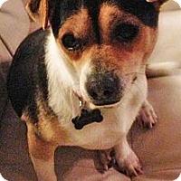 Adopt A Pet :: VALENTINO - Mission Viejo, CA