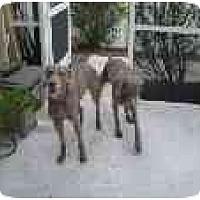Adopt A Pet :: Rupert & Sarah - Eustis, FL