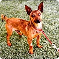 Adopt A Pet :: Johnny Boy - Mission Viejo, CA
