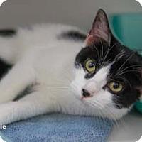 Adopt A Pet :: Sophie - Merrifield, VA