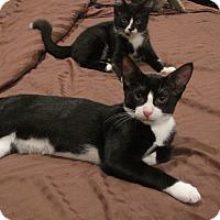 Adopt A Pet :: Willy - Berkeley Hts, NJ