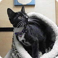 Adopt A Pet :: Penelope - Riverside, CA