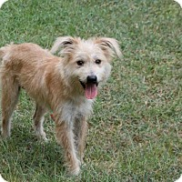 Adopt A Pet :: Smitty - Lufkin, TX