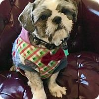 Adopt A Pet :: Lucas - Springfield, VA