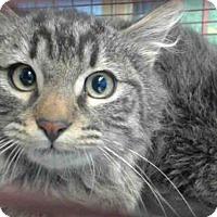 Adopt A Pet :: A490338 - San Bernardino, CA