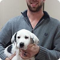 Adopt A Pet :: Dylan~ meet me! - Glastonbury, CT