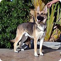 Adopt A Pet :: Bruce - Mira Loma, CA