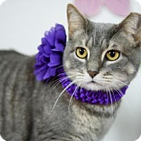 Adopt A Pet :: Ty Ty Princess - Wayne, PA