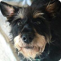Adopt A Pet :: Rayne - Waco, TX